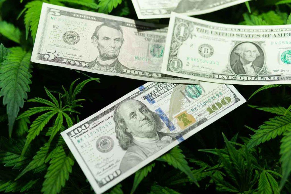 Investing in Feminized Marijuana Seeds for Optimum Quality Weed
