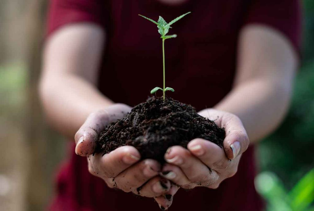 Necessary Equipments for Marijuana Seeds Germination