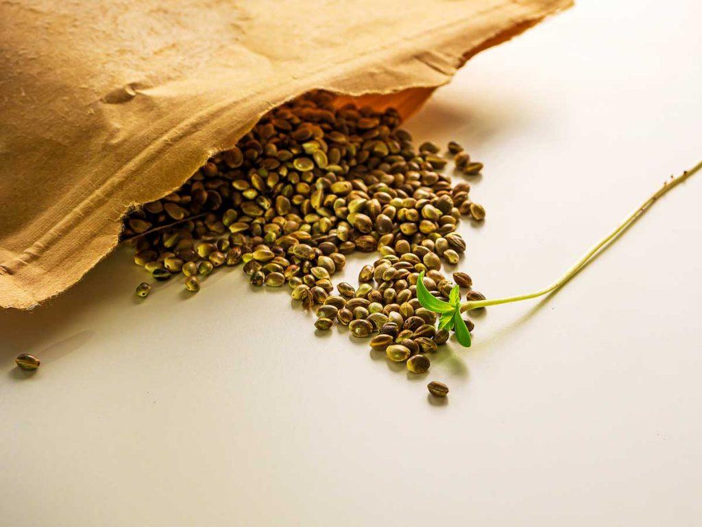 Where to Order Marijuana Seeds in Canada