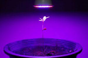 DIY LED Grow Light Ideas for Indoor Growers