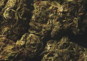 What is Kush and Why is it Famous in the Cannabis World