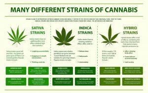 Indica and Sativa Benefits