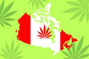 Is Buying Marijuana Seeds Legal in Canada